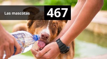 467. Las mascotas