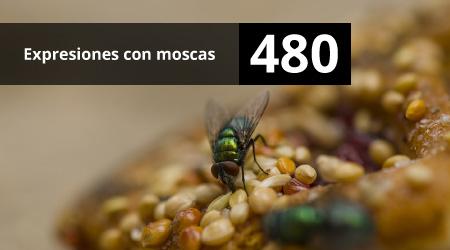 480. Expresiones con moscas